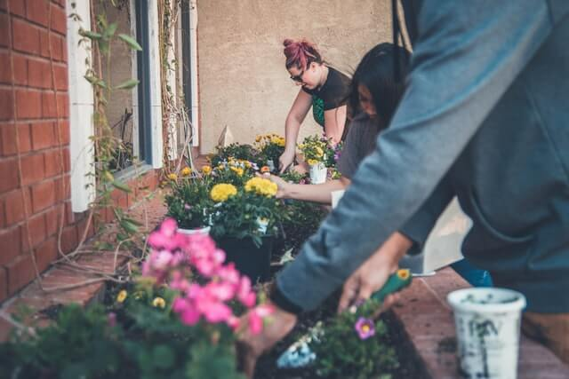 Three people dig in the dirt while planting flowers.